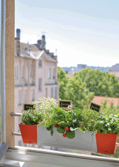 des plantes aromatiques sur mon balcon conseil balcon terrasse botanic botanic. Black Bedroom Furniture Sets. Home Design Ideas