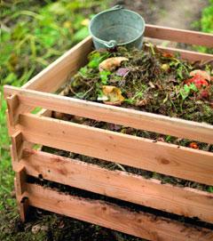 La prévention des maladies au jardin