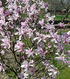 Les belles floraisons du printemps