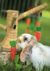 Les races de lapin