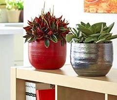 Plantes graphiques: l'art du végétal dans nos maisons