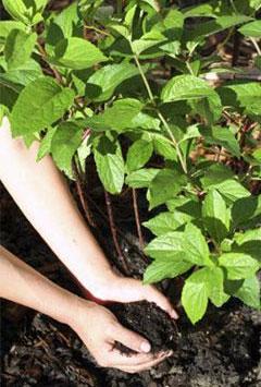 Répandez du fumier pour nourrir votre sol