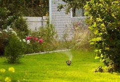 Création de pelouse : à chaque usage son gazon!