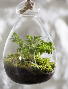 diy v g tal et d co je fabrique mon propre terrarium. Black Bedroom Furniture Sets. Home Design Ideas