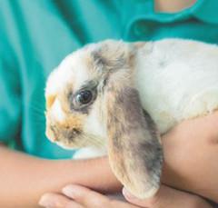 Le lapin : un NAC qui a tout pour plaire