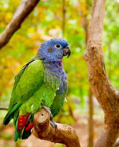 Volière extérieure pour oiseaux épanouis