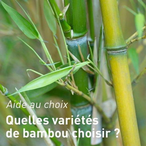 Prix bambou haie finest lot de bambous pour haie dcorative with prix bambou haie beautiful - Bambou en pot jardiland ...