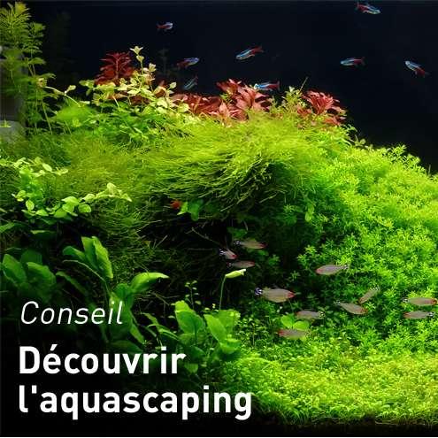 Deco Aquarium Botanic Nos Accessoires Pour Aquarium Botanic