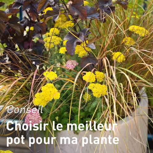 Supports et accessoires plantes d 39 int rieur pots et for Accessoire plante interieur