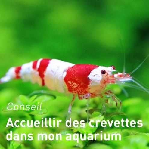 Pompe aquarium botanic for Bac a poisson jardiland