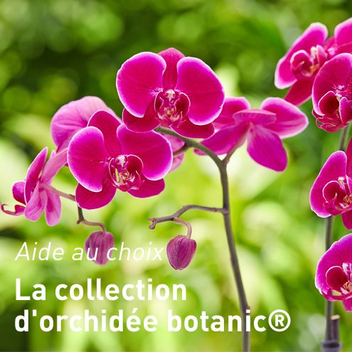 collection-d-orchidees-botanic