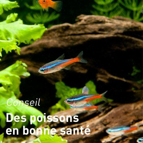 poissons et invert br s d 39 eau douce aquariums alimentation accessoires pour poissons et. Black Bedroom Furniture Sets. Home Design Ideas