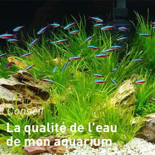 Filtre aquarium botanic notre s lection de filtres for Aquarium botanic