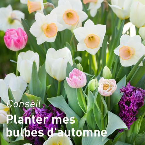 bulbe fleur botanic tous nos bulbes de fleurs botanic. Black Bedroom Furniture Sets. Home Design Ideas