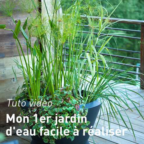 Bassin De Jardin Facile - Amazing Home Ideas - freetattoosdesign.us