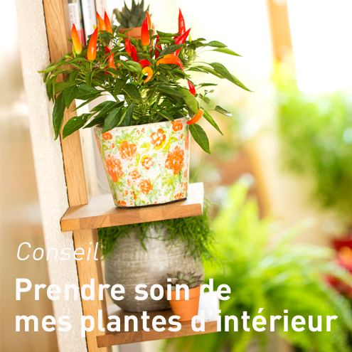 plante verte botanic toutes nos plantes vertes. Black Bedroom Furniture Sets. Home Design Ideas