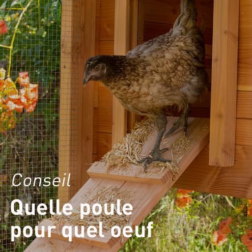 hygi ne et entretien poules basse cour et animalerie botanic. Black Bedroom Furniture Sets. Home Design Ideas