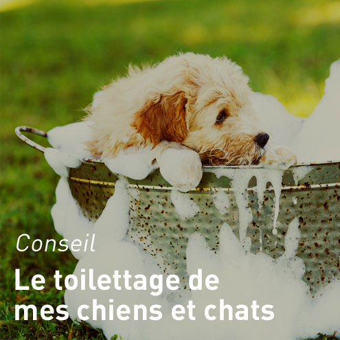 toilettage-chien-chat