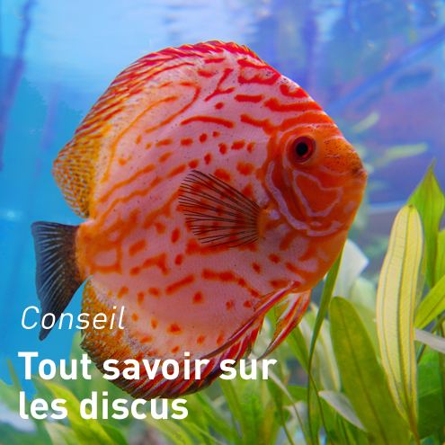 Chauffage aquarium aquariums alimentation accessoires for Alimentation poisson aquarium