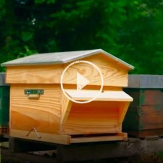 BlocConseil_capsule_apiculture