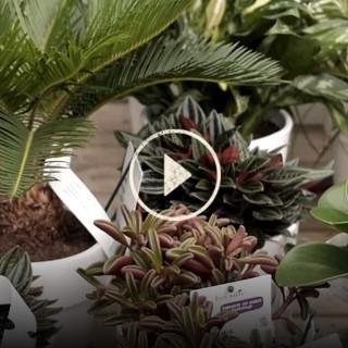 BlocConseil_capsule_garantie-plantes-faciles