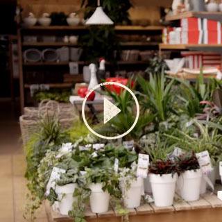 BlocConseil_capsule_garanties-plante-facile