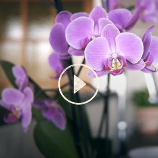 BlocConseil_capsule_rempoter-mon-orchidee
