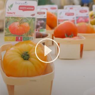 BlocConseil_capsule_secrets-de-producteur-tomates