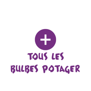 BlocConseil_categorie_bulbes-potagers-pommes-de-terre