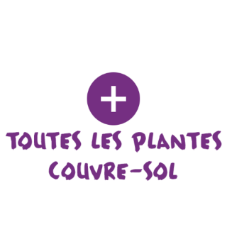les plantes couvre sol conseil jardin et plantes. Black Bedroom Furniture Sets. Home Design Ideas