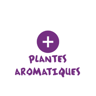 notre sélection de plantes aromatiques