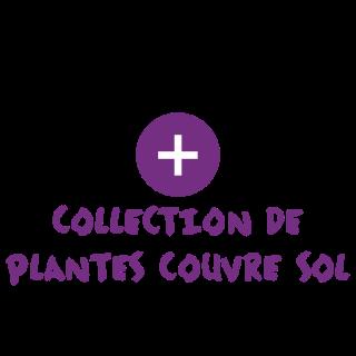 BlocConseil_categorie_plantes-couvre-sol
