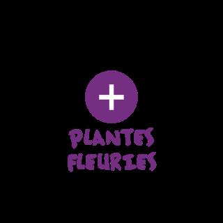 BlocConseil_categorie_plantes-fleuries