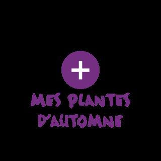 BlocConseil_categorie_plantes-pour-jardinieres