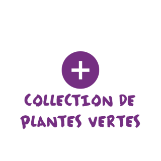 BlocConseil_categorie_plantes-vertes