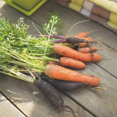 Conseils potager astuces et conseils potager botanic botanic - Que semer en octobre ...