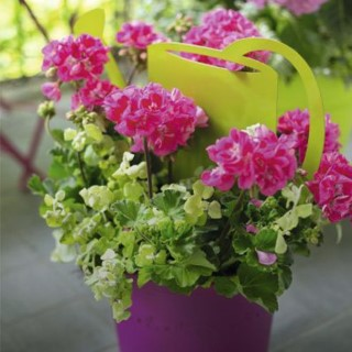 BlocConseil_aide-au-choix-geraniums
