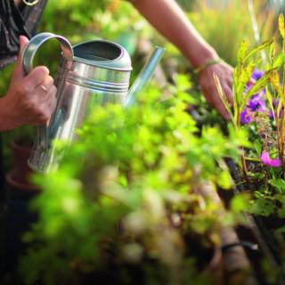 BlocConseil_arroser-facilement-mes-plantes-sur-mon-balcon-et-ma-terrasse