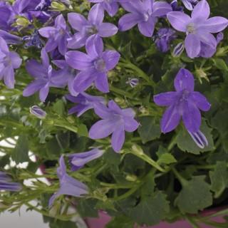 BlocConseil_composer-sa-jardiniere-de-printemps