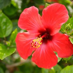 BlocConseil_hibiscus