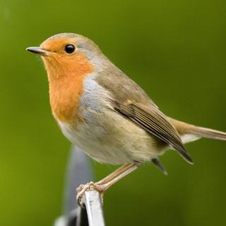 BlocConseil_mangeoire-pour-oiseaux