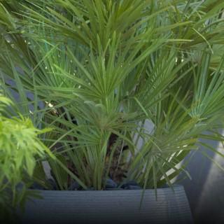 BlocConseil_les-palmiers-d-interieur
