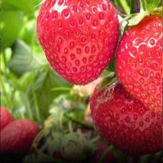 BlocConseil_les-petits-fruits-gourmands-le-bonheur-est-dans-le-pot