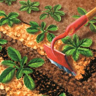 BlocConseil_plantez-vos-haricots