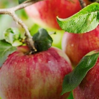 BlocConseil_pommes-caramelisees-aux-epices