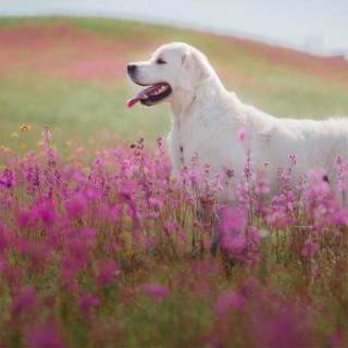 Le bien être de nos animaux par les plantes