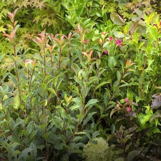 Conseils jardin astuces et conseils jardin botanic botanic for Conseil pour le jardin