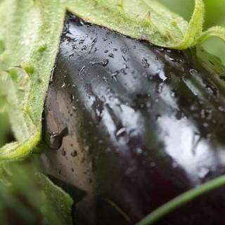 Que semer en janvier conseil potager botanic botanic - Que semer en octobre ...