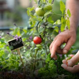 BlocConseil_recolter-et-conserver-ses-legumes