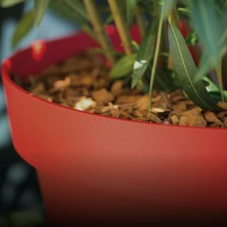 BlocConseil_rempoter-les-plantes-vertes